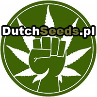 dutch passion, nasiona marihuany, cannabis seeds