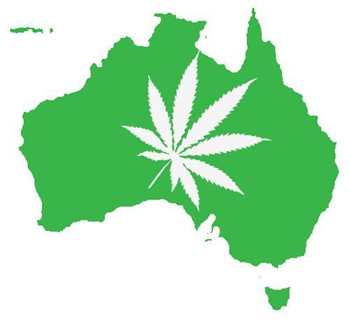 Odkryto Nową Odmianę Konopi, Marihuany, Dutch Seeds