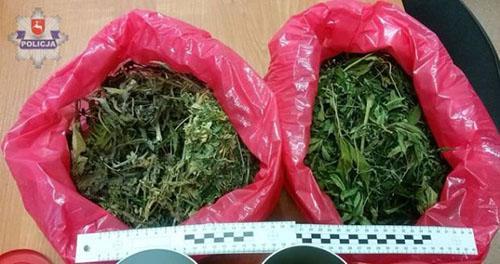 Policjant na Emeryturze Założył Plantację Marihuany, Dutch Seeds