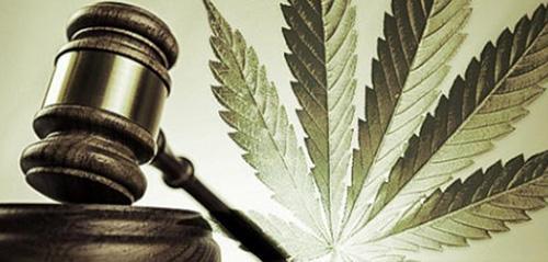 Sędzia z Kanady Umorzył Sprawę Mężczyzny, Który Hodował 414 Roślin Marihuany, Dutch Seeds