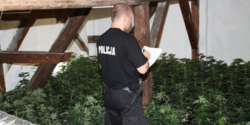 Co Policja Wie o Marihuanie?, Dutch Seeds