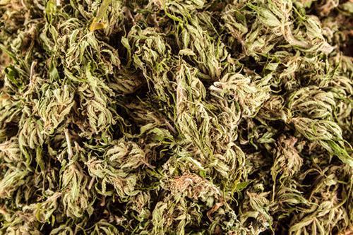 Marihuana Wcale Nie Jest Taka Zła, Dutch Seeds