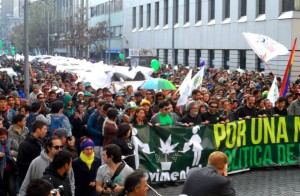 Koniec Prohibicji Marihuany, Dutch Seeds