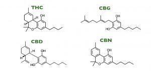 rodzaje-kannabinoidow-thc-cbd-cbn-300x142