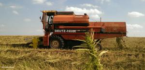 Konopie przemysłowe dobrze chronią domy, Dutch Seeds