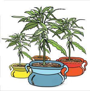 Doniczki przy uprawie marihuany, Dutch Seeds