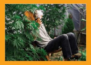 Wielka Brytania: Decyzja warta miliardy, Dutch Seeds