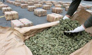 Serbia: Skonfiskowano ponad 1 tonę marihuany, Dutch Seeds