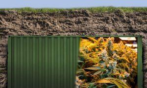 Uzdrowiciel prowadził podziemną plantację marihuany w kontenerze, Dutch Seeds