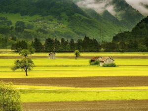 Szwajcaria: dozwolone małe dawki cannabisu w niektórych kantonach, Dutch Seeds