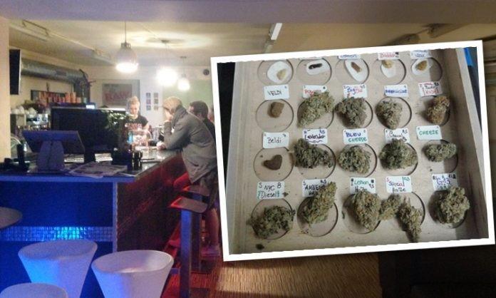 Cannabis Social Cluby w Barcelonie Na Skraju Egzystencji, Dutch Seeds