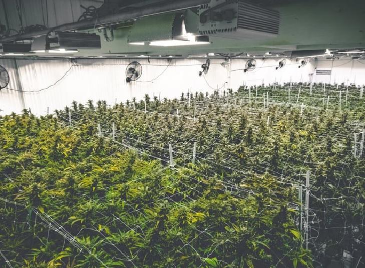 Kanada: Co Zrobić z Nadmiarem Cannabisu?, Dutch Seeds