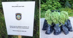 Policja wyśmiewa w internecie growera, Dutch Seeds