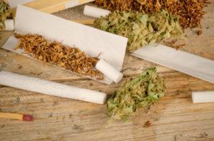 Nikotyna i cannabis   oddziaływanie na mózg, Dutch Seeds