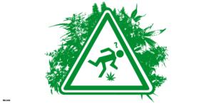 Cannabis przy przewlekłych bólach nerwowych, Dutch Seeds