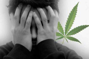 Marihuana nie powoduje schizofrenii, Dutch Seeds