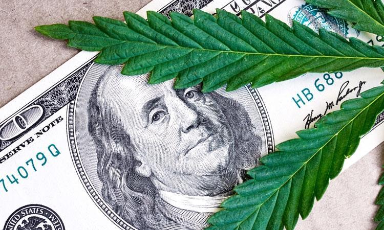 Rekord: Ponad Dwie Trzecie Obywateli USA Opowiada Się Za Legalizacją, Dutch Seeds